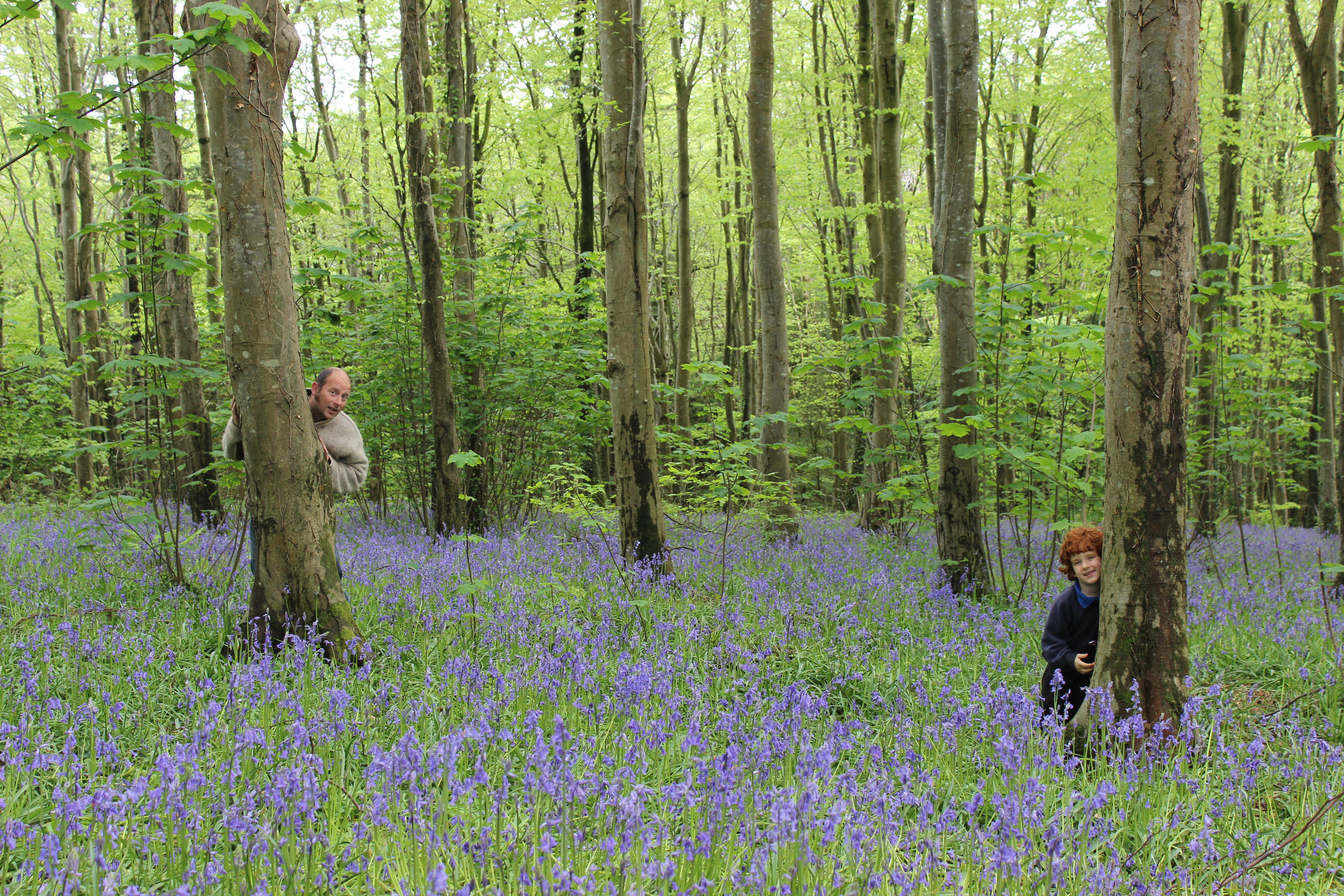 Stan and Ossian exploring the Lodge Park bluebell woods