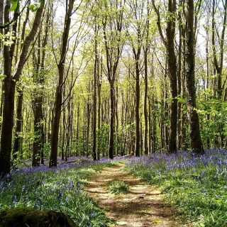 Something to look forward to. 😊 #stackpolecamp #nationaltruststackpole #bluebells #hope #springwillcomeagain